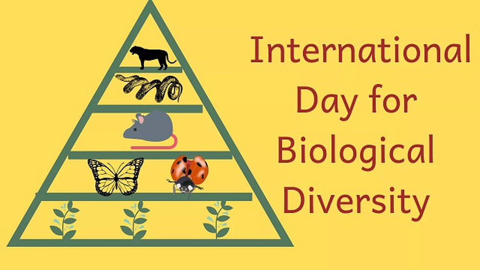 International Day For Biological Diversity 2019 Is Being Celebrated On 22  May With The Theme &Quot;Our Biodiversity, Our Food, Our Health&Quot;.