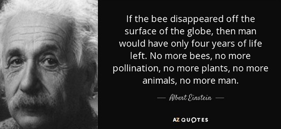 World honey bee day was observed on August 17, 2019.