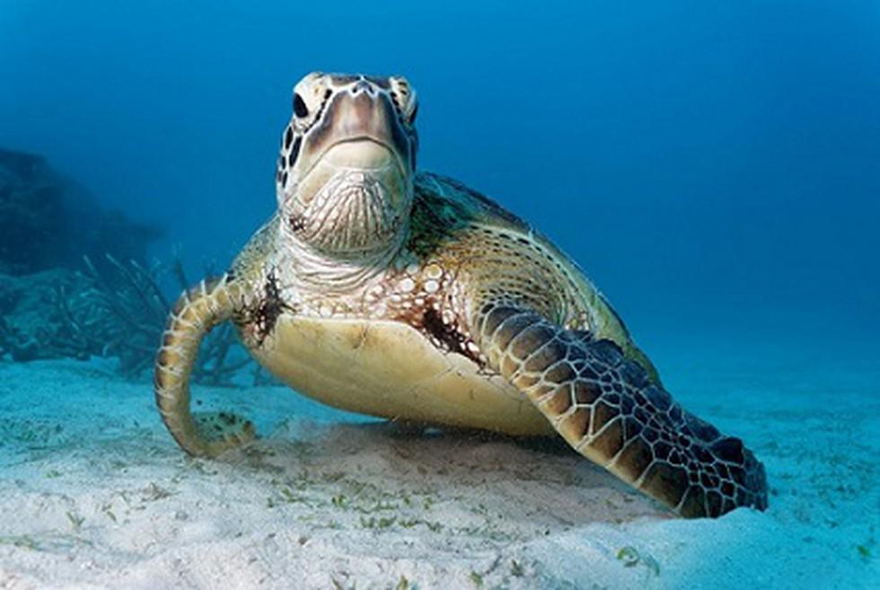 National Marine Turtle Action Plan